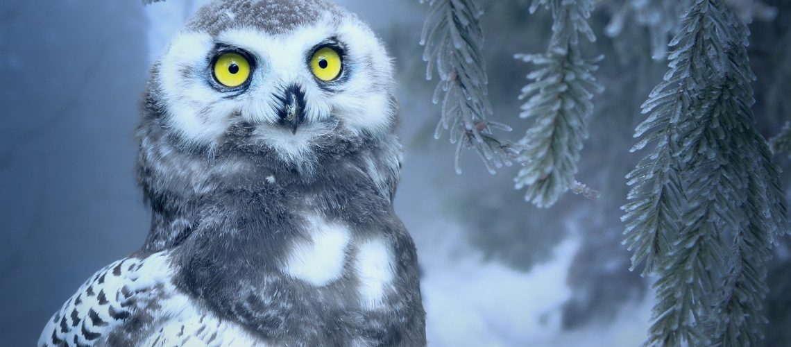 winter_1